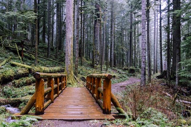 Groothoek opname van een brug in het bos, omringd door bomen