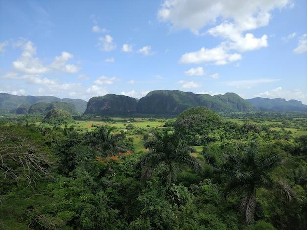 Groothoek opname van een groot groen landschap vol bomen en gras