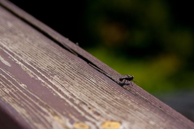 Groothoek opname van een zwarte vlieg die zich op een houten oppervlak
