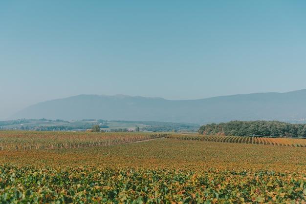 Groothoek opname van groene landschappen, bomen en bergen onder een heldere blauwe hemel