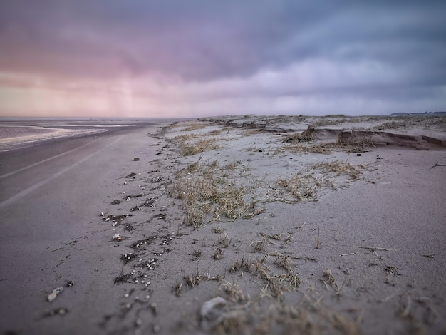 Groothoek opname van het strand bedekt met droge planten onder een bewolkte hemel