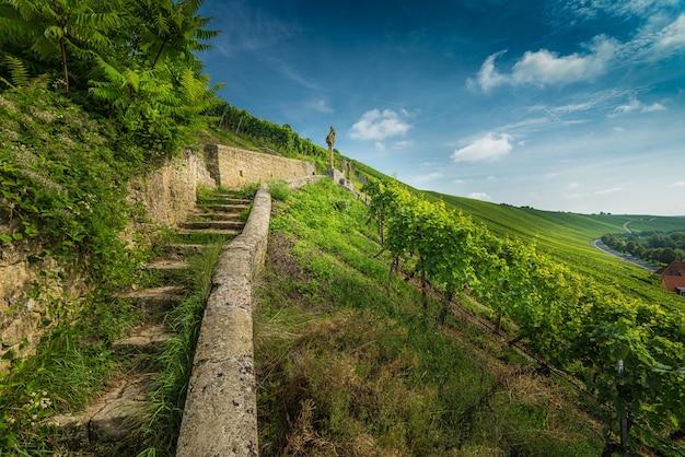 Groothoek opname van trappen omgeven door wijnstokken