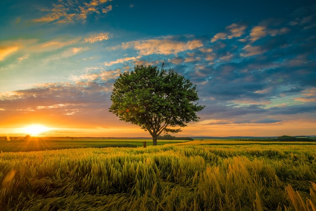 Groothoekopname van een enkele boom die groeit onder een bewolkte hemel tijdens een zonsondergang omgeven door gras