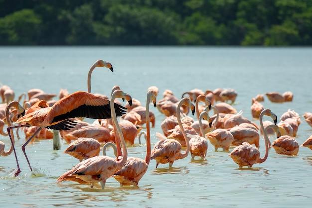 Groothoekopname van een zwerm flamingo's in het water, omringd door bomen