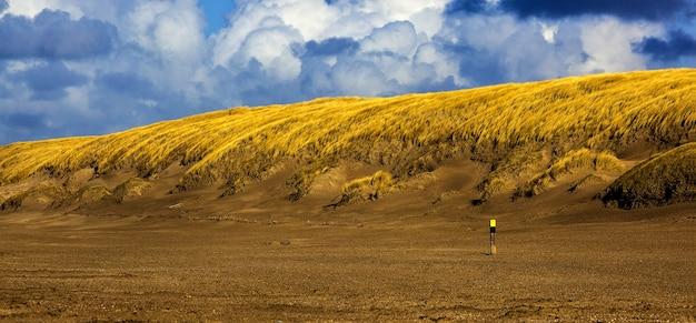 Groothoekopname van tarwerietjes die op een bewolkte dag op een kleine heuvel groeien