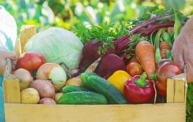 Grootmoeder en kind met groenten in de moestuin.