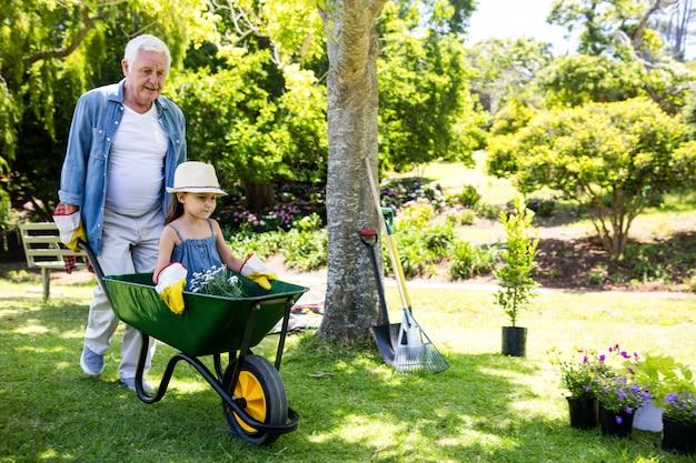 Grootvader die zijn kleindochter in een kruiwagen draagt