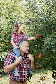Grootvader met kleindochter met appel in de appelboomgaard.