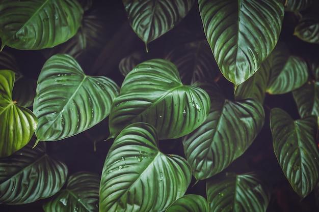Grote bladerenachtergrond