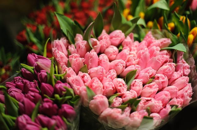 Grote boeketten van paarse en roze tulpen