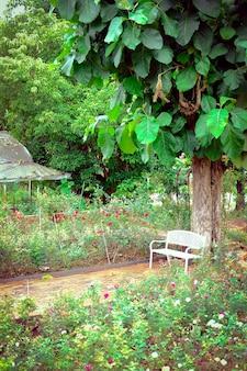 Grote boom en witte bank in rozentuin