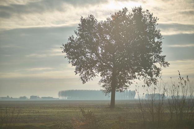 Grote boom genesteld in een landschap met mist en mist typisch voor noord-italië.