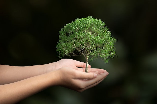 Grote boom groeit in menselijke hand op onscherpte, concept van de dag van de aarde