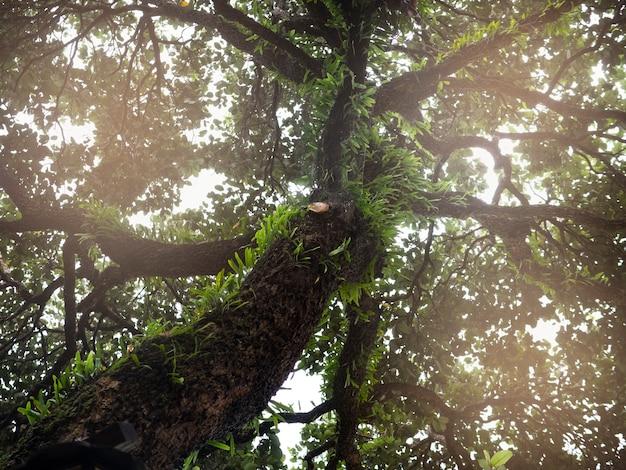 Grote boom groene tak met blad de wereld redden met flare zonlicht