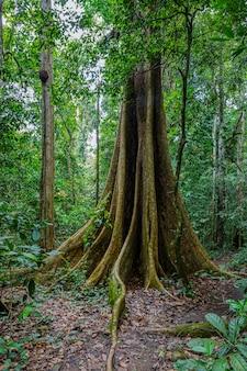 Grote boom in het bos