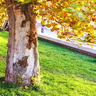 Grote boom in het zonnige park met groen gras