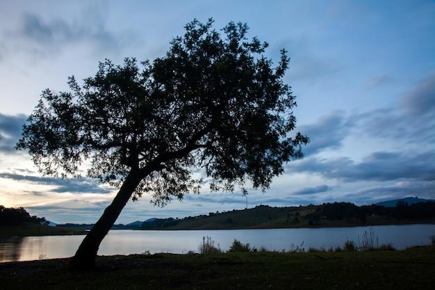 Grote boom in plattelandsgebied met water bij eventide