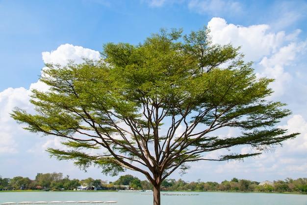 Grote boom naast meer met blauwe hemel.