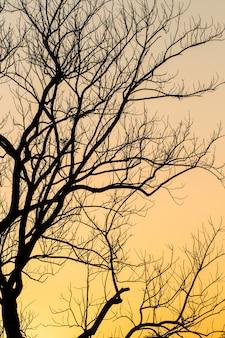 Grote boom silhouet zonsondergang hemelachtergrond
