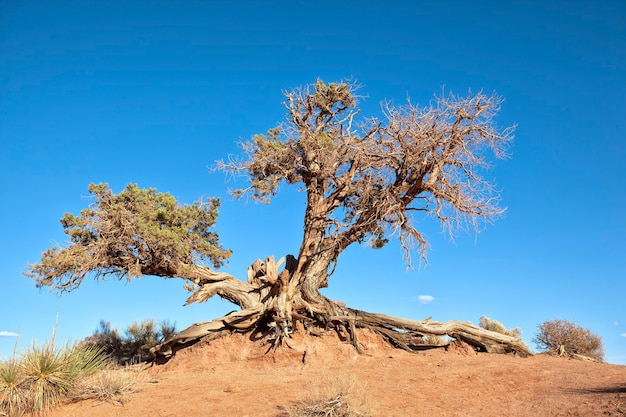 Grote boomwortel in blauwe hemel