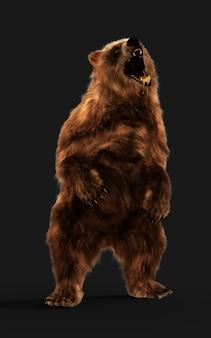 Grote bruine beer houding geïsoleerd op donkere achtergrond met uitknippad.