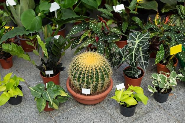 Grote cactus in pot met verschillende kamerplanten