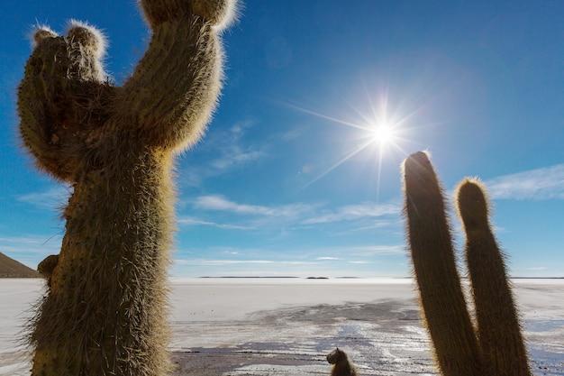 Grote cactus op het eiland incahuasi, zoutvlakte salar de uyuni, altiplano, bolivia. ongewone natuurlijke landschappen verlaten zonnereizen zuid-amerika