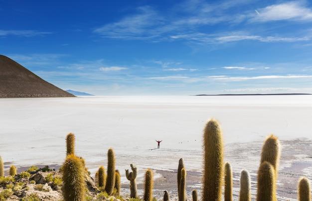 Grote cactus op het eiland incahuasi, zoutvlakte salar de uyuni, altiplano, bolivia