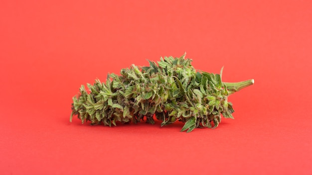 Grote cannabisknop op rode close-up.
