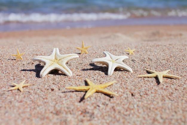 Grote en kleine zeesterren op het zand op het strand aan zee