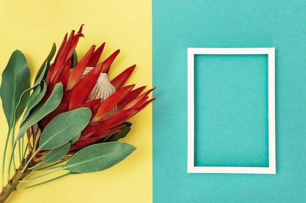 Grote exotische bloemprotea met rode bloemblaadjes en witmetaalframe op gele en blauwe document achtergrond. bovenaanzicht en kopie ruimte. mooie kleurrijke decoratie. plat liggende compositie.