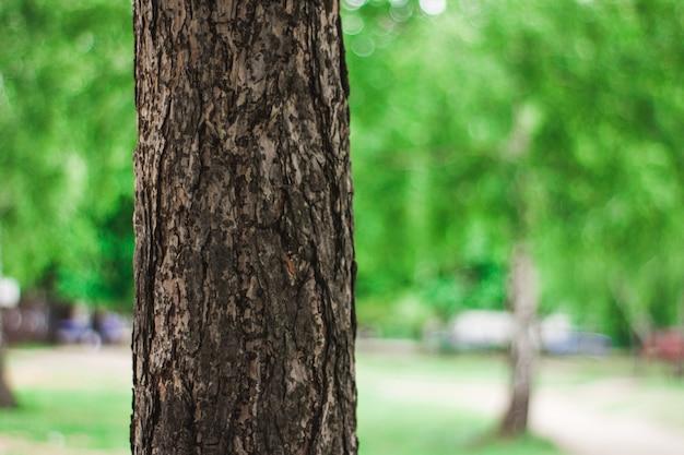 Grote fat trunk van een prachtige boom close-up