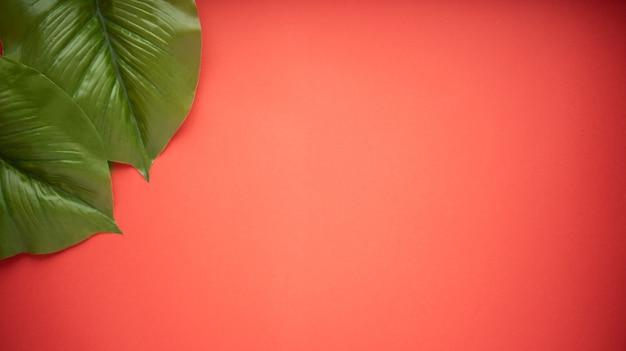 Grote felgroene bladeren van de ficusboom op een felrode achtergrond. plat leggen.