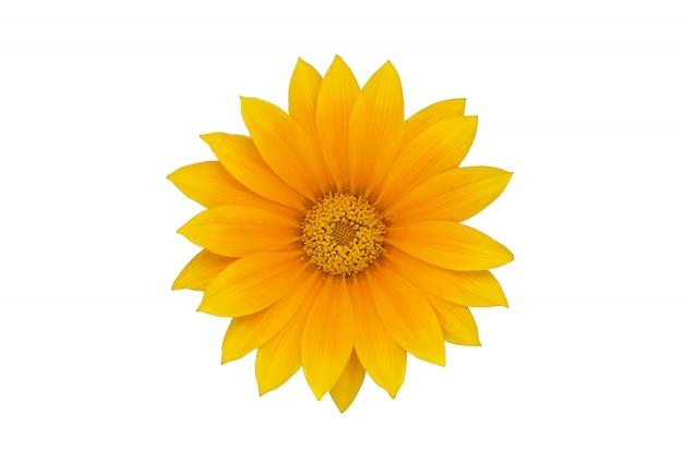 Grote gele bloem die op witte achtergrond wordt geïsoleerd