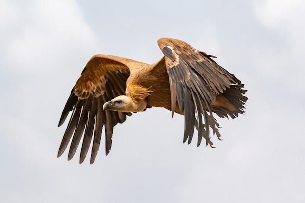 Grote gier tijdens de vlucht