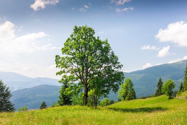 Grote groene boom die zich op grasweide bevindt in bergen