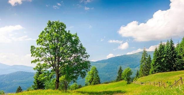 Grote groene boom die zich op grasweide bevindt
