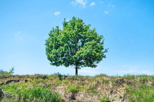 Grote groene boom op de klif met blauwe lucht