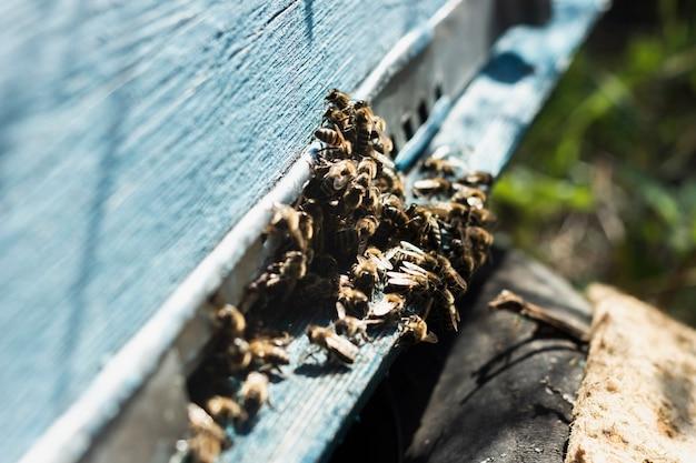 Grote groep bijen buiten bijenkorf