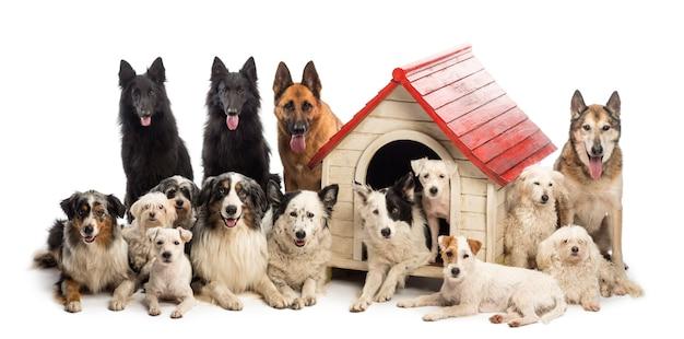 Grote groep honden in en rond een kennel tegen een witte achtergrond