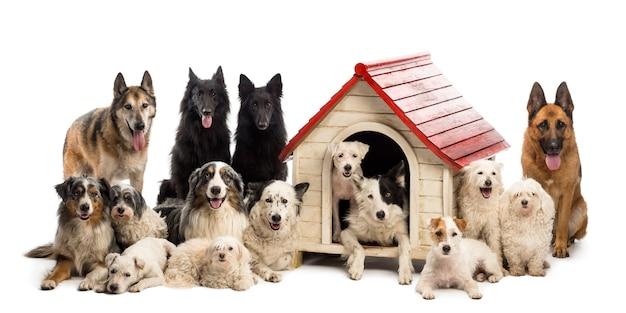 Grote groep honden in en rondom een kennel tegen witte muur