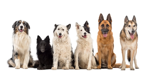 Grote groep van veel honden tegen een witte achtergrond