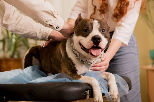 Grote hondengenezingssessie