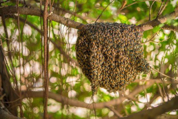 Grote honingraat op de boom in tropisch regenwoud.