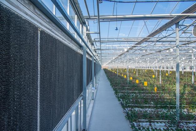 Grote industriële kas en glazen overkapping met hollandse rozen, het totaalplan