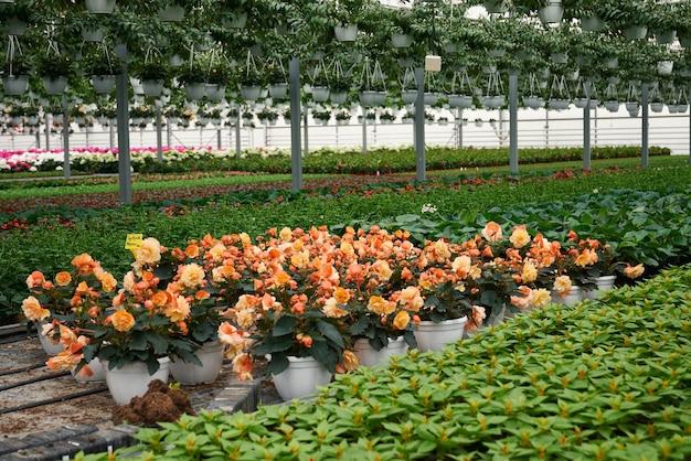 Grote kas met prachtige bloemen en planten te koop