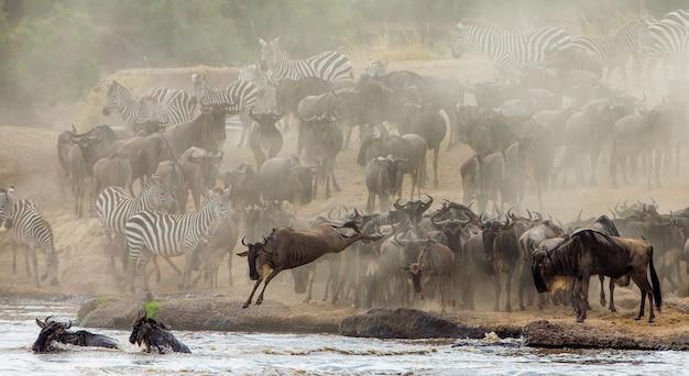Grote kudde gnoes gaat over de mara-rivier. grote migratie. kenia. tanzania. masai mara nationaal park.