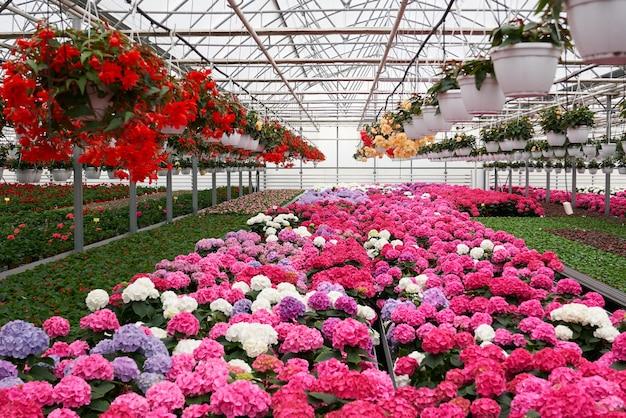 Grote lichte kas met veel zaailingen en bloemen