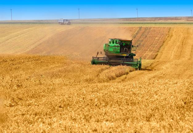 Grote maaidorser die aan een tarweveld werkt