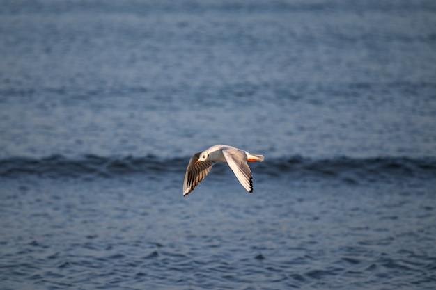 Grote meeuw die overdag over de zee vliegt